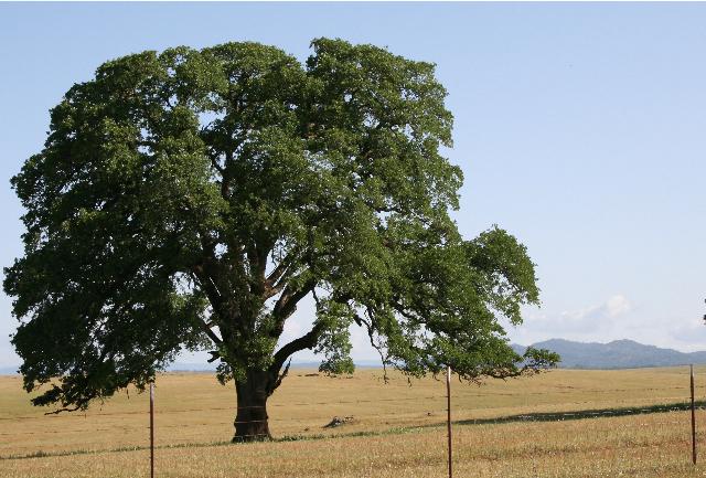 Apple tree dating theory