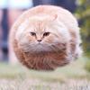 mooseman90's avatar