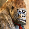 deadjaw's avatar