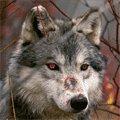CyberVVolf's avatar