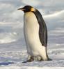 Birdbrain9's avatar