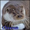 Otterun's avatar