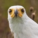 Naravelle's avatar