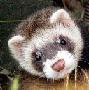 Silver_Weasel's avatar