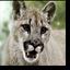 Koogar's avatar