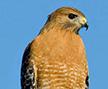 Silentspy's avatar