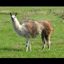 Swedish_Llama's avatar