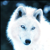 SnowBlindWolf's avatar