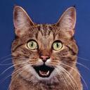 shnapdragon's avatar