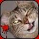 Blizzlock's avatar