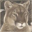 justin55555's avatar