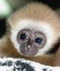 Mister_Monkey's avatar