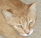 ultrudeus's avatar