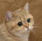 ClassyCats's avatar