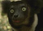 Gregorio246's avatar