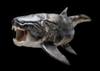 dunkleosteus's avatar