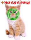 navyvinny's avatar