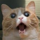 endofzero's avatar
