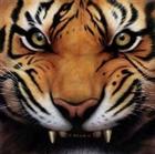 tiger7758's avatar