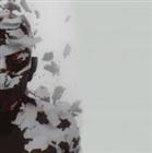 Fiji_Wiji's avatar