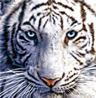 ISQUISHALL's avatar