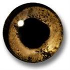MCFUser654070's avatar