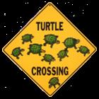 turtle2472's avatar