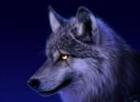 warbrand2's avatar