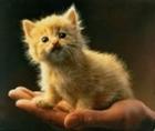 TheMerricat's avatar