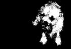Chadub's avatar