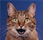 James11130's avatar
