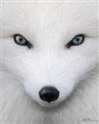SaintForge's avatar