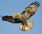 hawkbeaver's avatar