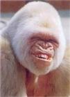 Canias's avatar