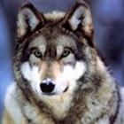 Kliuyyyy's avatar