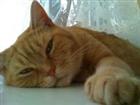 Cat_Herder's avatar