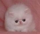 Kingjimi1's avatar
