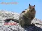 xXSquirrelsXx's avatar