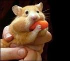 Hamster577's avatar