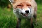foxky's avatar