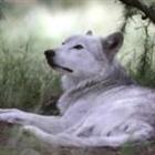 WolfTheHunter's avatar