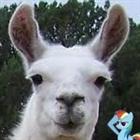 llama66613's avatar