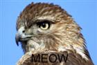 SupremeHawk's avatar
