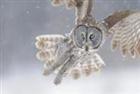 Night_Talon's avatar
