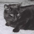 bennkenn's avatar