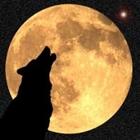 WolfGeek101's avatar