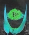 Firetempest's avatar