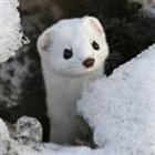 Serendipiteit's avatar