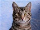 cat_miner's avatar