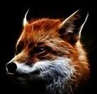 Arctic_IceFox's avatar